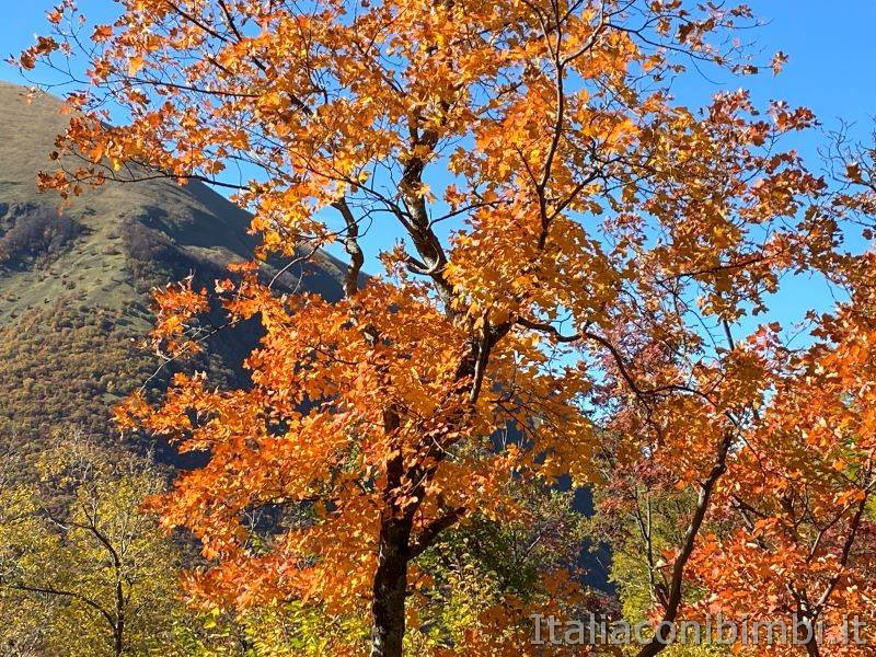 Sentiero natura di Bolognola Fonte dell'Aquila - autunno