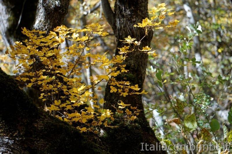 Sentiero natura di Bolognola - Fonte dell'Aquila