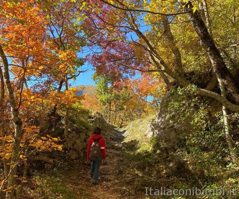 Sentiero natura di Bolognola per Fonte dell'Aquila - bosco