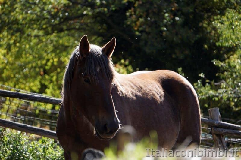 cavallo a Bolognola