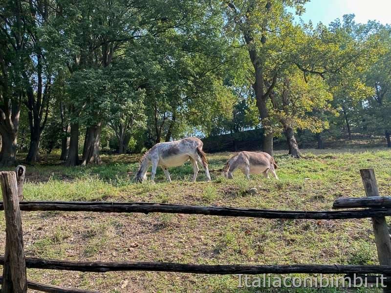 Parco Sigurta - asinelli