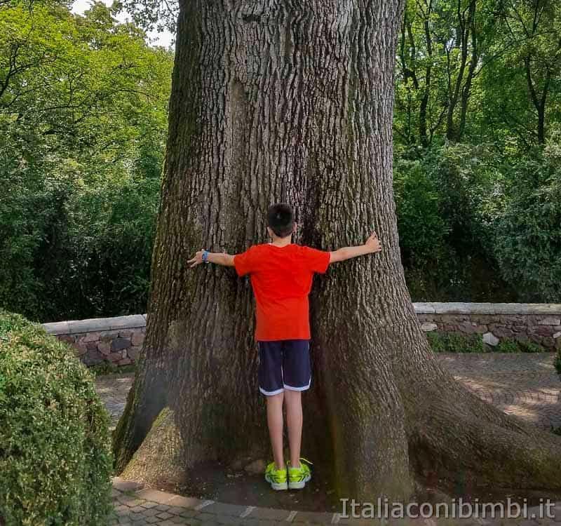 Parco Sigurtà - bambino che abbraccia l'albero