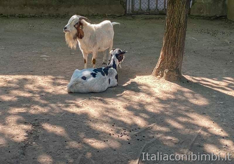 Parco Sigurta - caprette