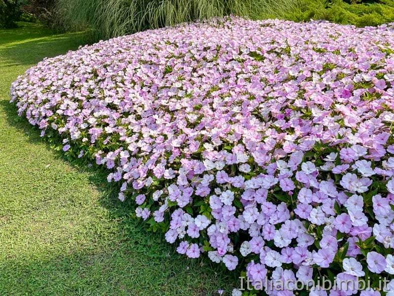 Parco Sigurtà - fioritura