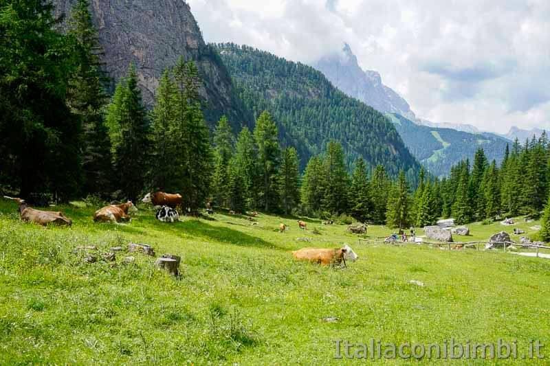 Val Gardena - Vallunga mucche