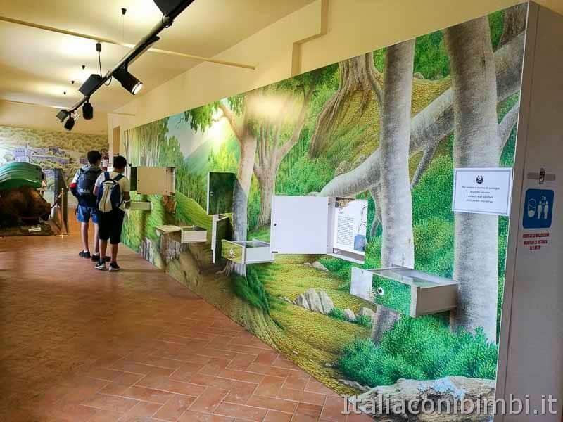 Parco nazionale della Majella - MOM museo dell-orso marsicano interno
