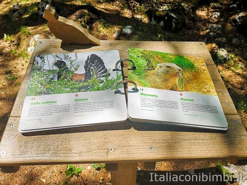 Sarnacli Park - animali del bosco