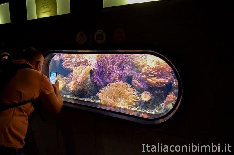 Acquario di Cattolica - anemoni