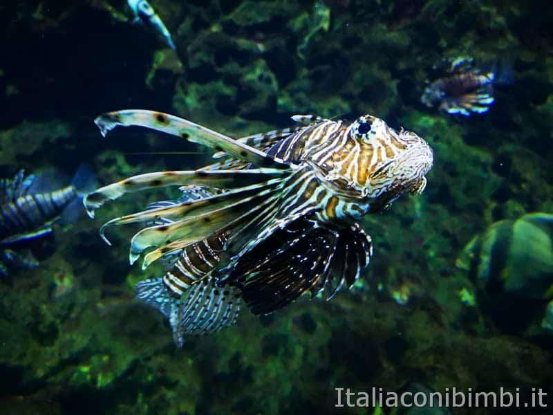 Acquario di Cattolica - pesce degli abissi_1