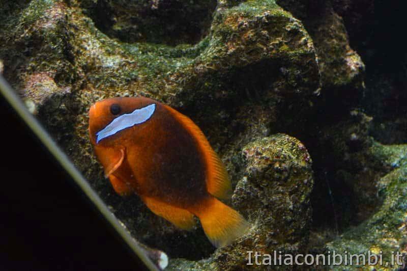 Acquario di Cattolica - pesce rosso