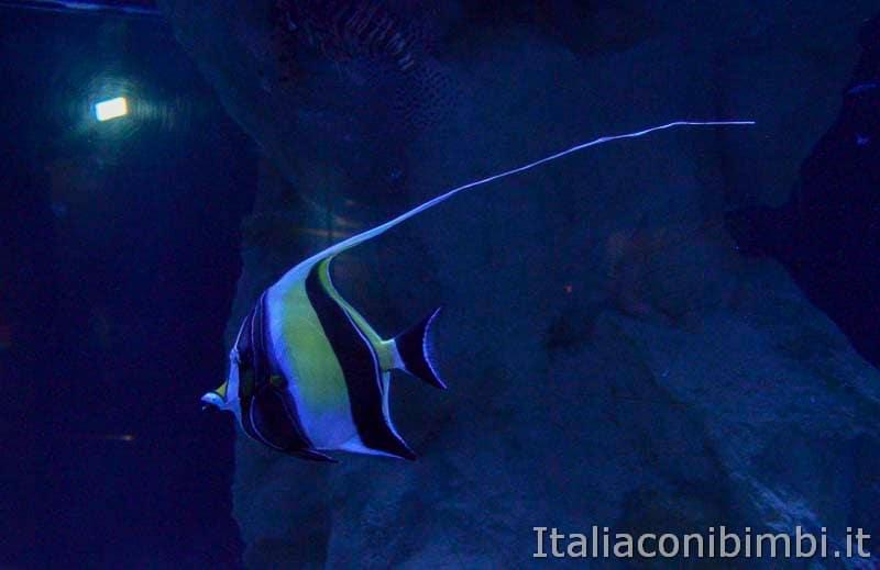Acquario di Cattolica - pesce tropicale