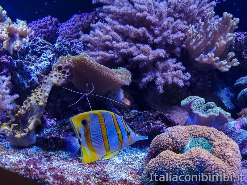 Acquario di Cattolica - pesci tropicali