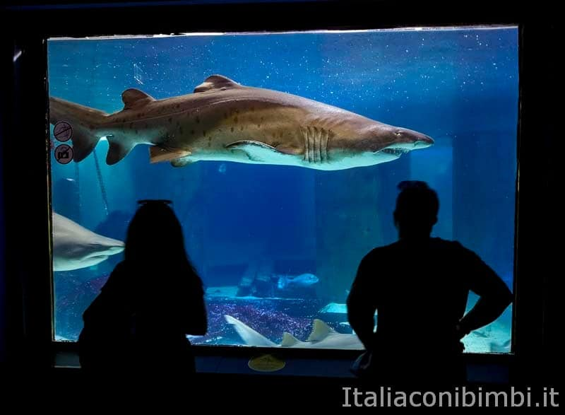 Acquario di Cattolica - visitatori e squali