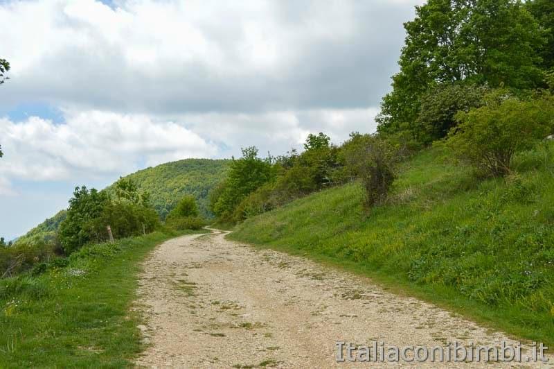 Altopiano del Voltigno - sentiero