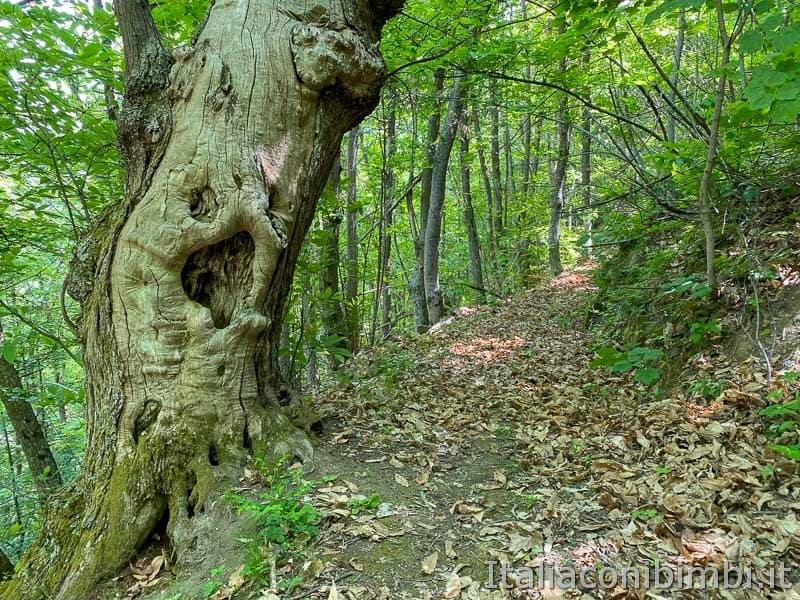 Anello Fleno San Gregorio - alberi secolari