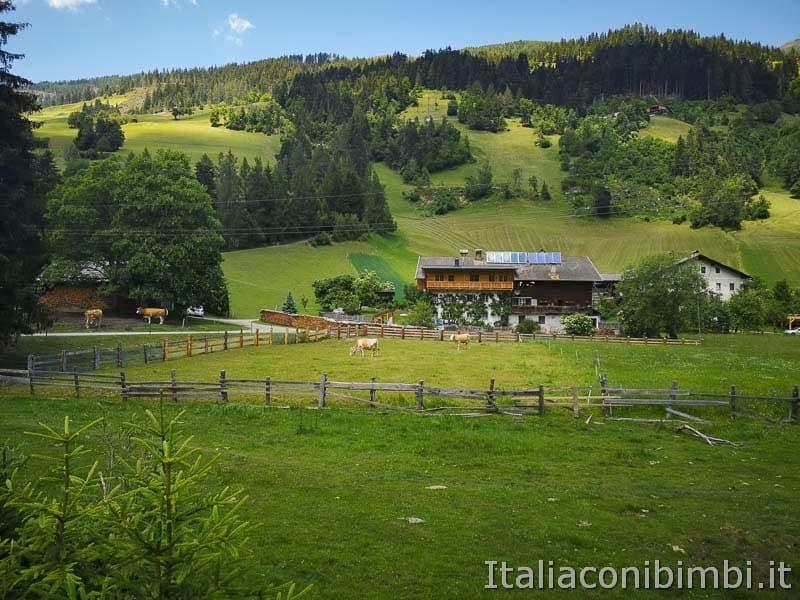 Ciclabile San Candido Lienz - mucche