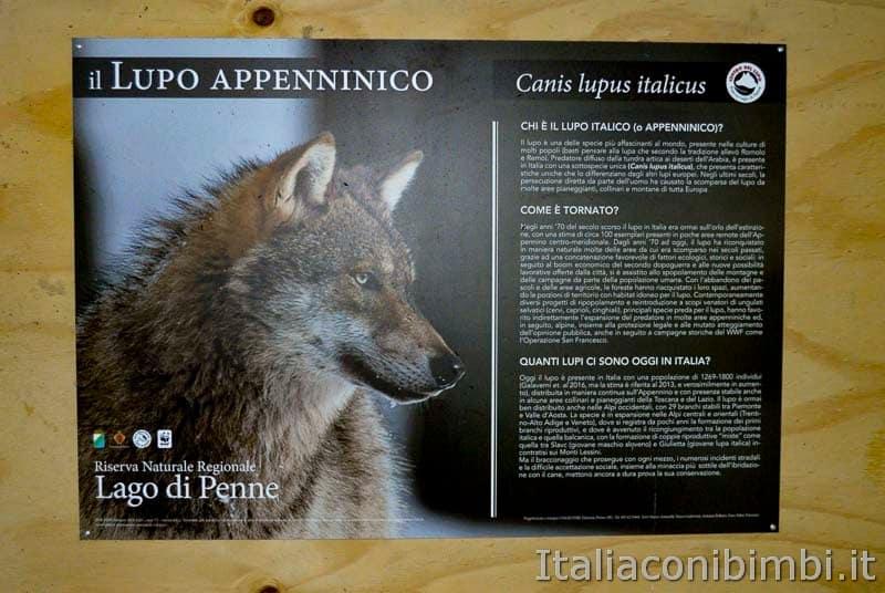 Riserva naturale lago di Penne - informazioni sul lupo appenninico