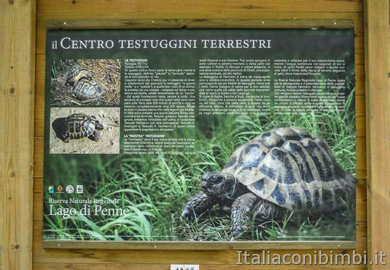 Riserva naturale lago di Penne - tartarughe