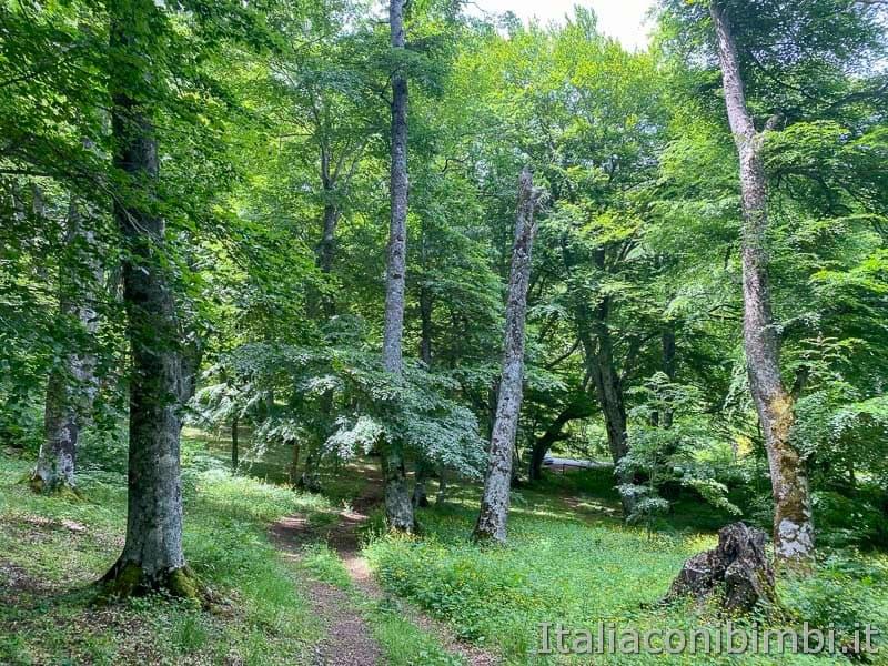 Bosco di Sant'Antonio - alberi