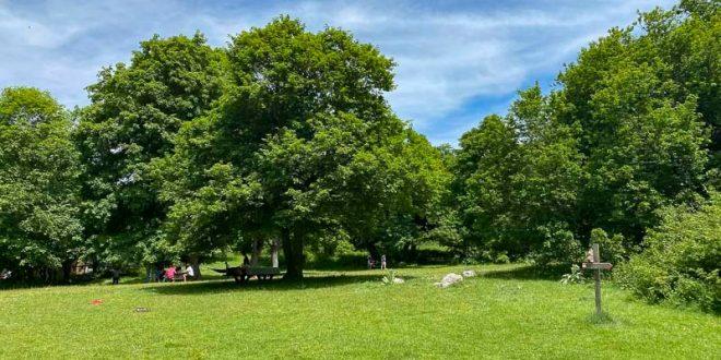 Bosco di Sant'Antonio - area picnic alberi