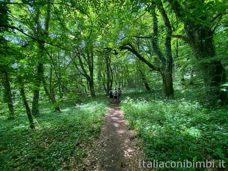 Bosco di Sant'Antonio - sentiero natura