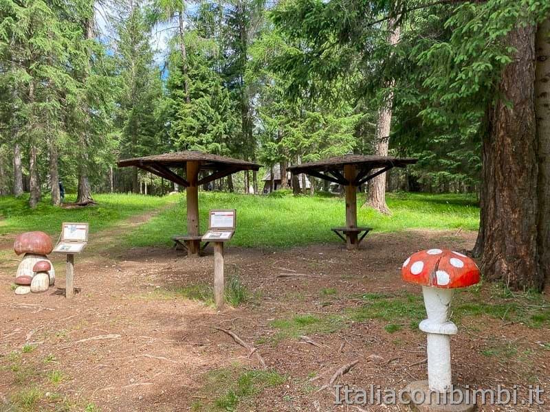Mondo Magico della Foresta - funghetti