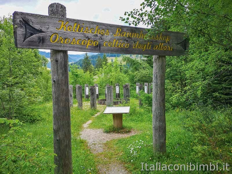 Mondo Magico della Foresta - oroscopo celtico ingresso