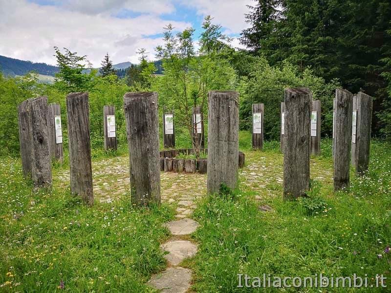 Mondo Magico della Foresta - oroscopo celtico tronchi