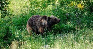Palena - area faunistica dell'orso