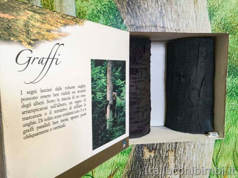 Palena - museo dell'orso graffi