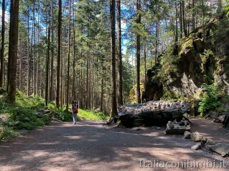 Cascate di Riva - Valle Aurina - sentiero nel bosco