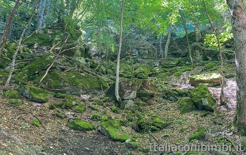 Il Ceppo - muschio nel bosco