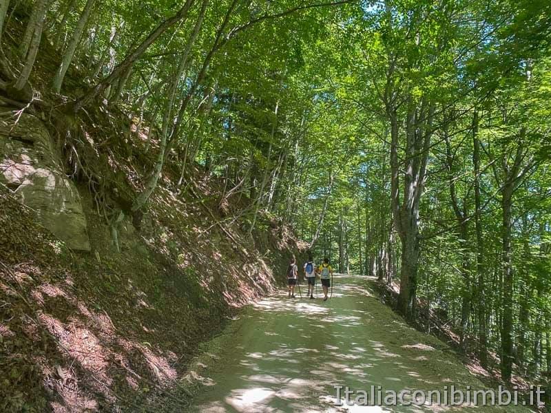 Il Ceppo - passeggiata nel bosco Martese