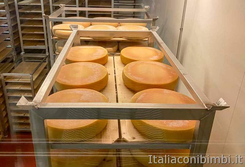 Mondo latte - Dobbiaco - cantina di stagionatura forme di formaggio