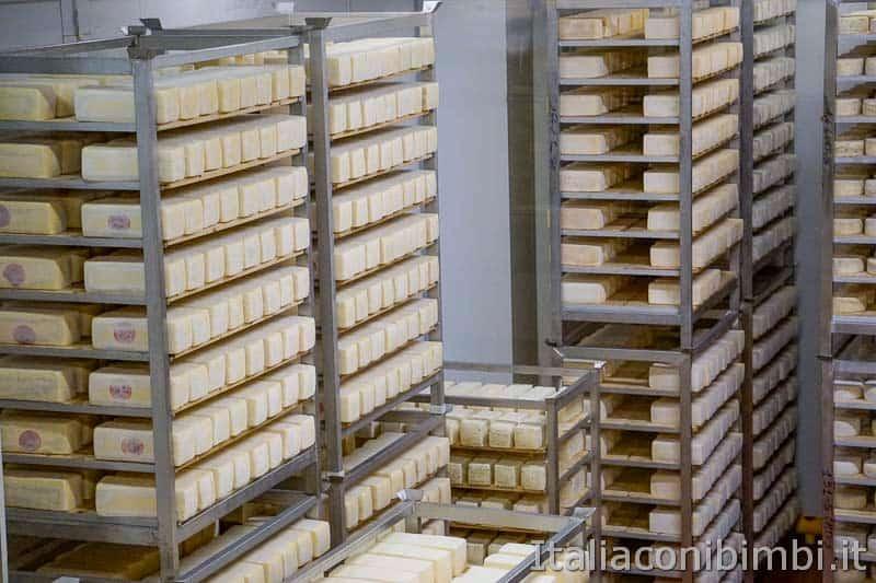 Mondo latte - Dobbiaco - formaggi nella cantina di stagionatura