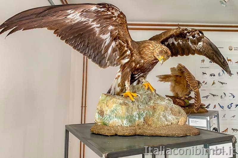 Riserva naturale Gola del Furlo - museo - aquila