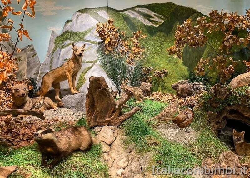 Riserva naturale Gola del Furlo - museo del territorio - animali