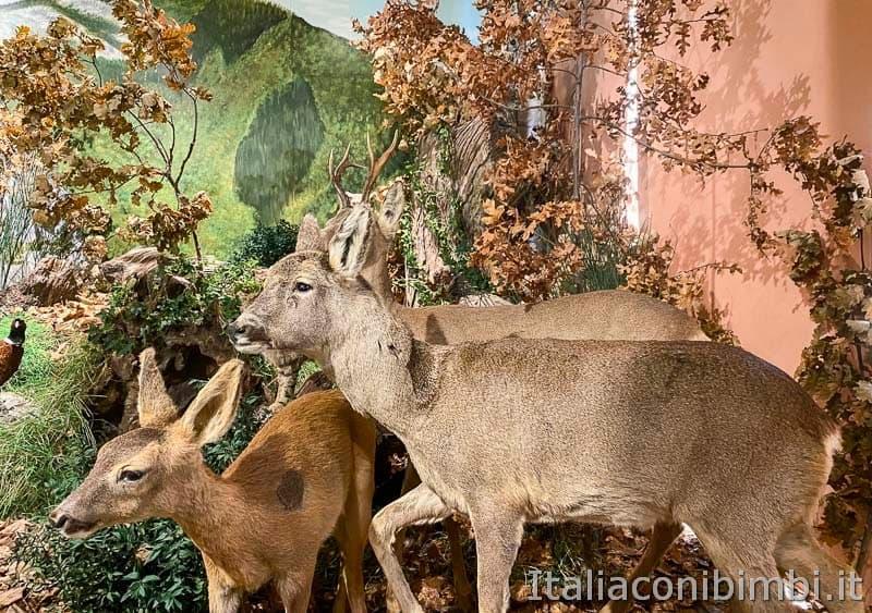 Riserva naturale Gola del Furlo - museo del territorio - cerbiatti