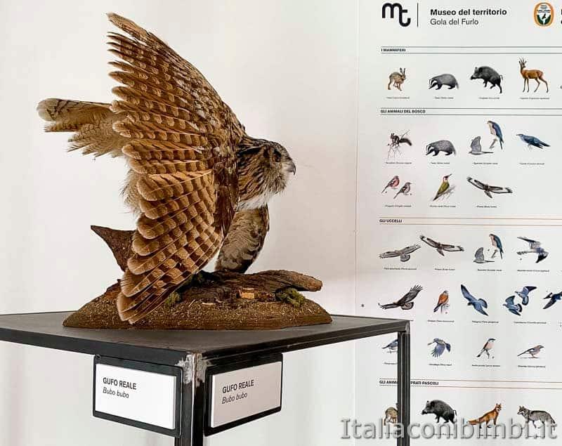 Riserva naturale Gola del Furlo - museo del territorio - gufo