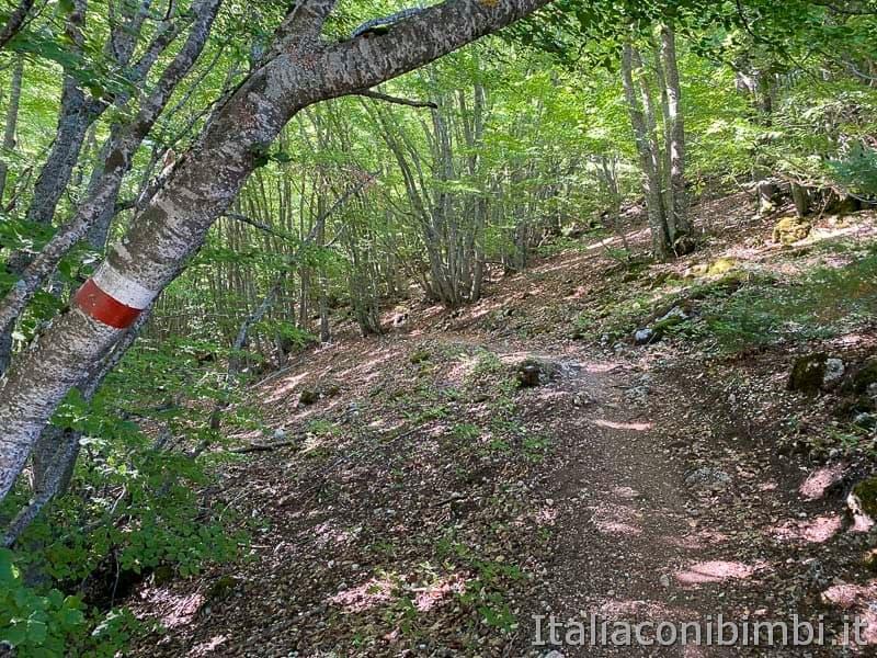 Roccaraso - sentiero 103 - bosco