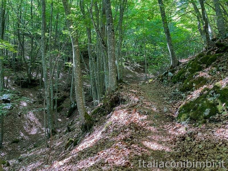 Roccaraso - sentiero 103 - faggeta