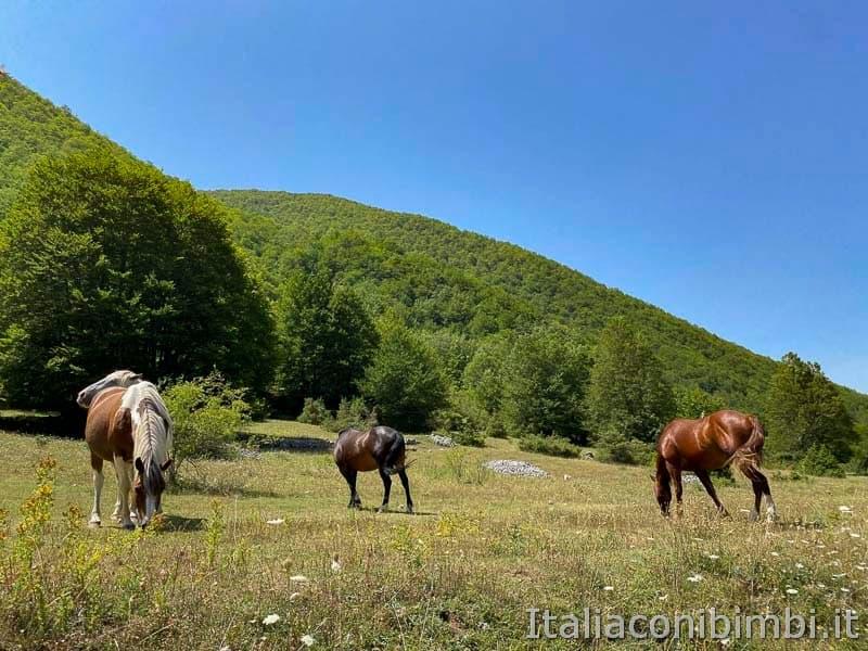 Val Fondillo - sentiero F2 cavalli