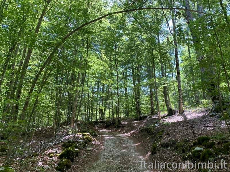 Val Fondillo - sentiero F2 nel bosco