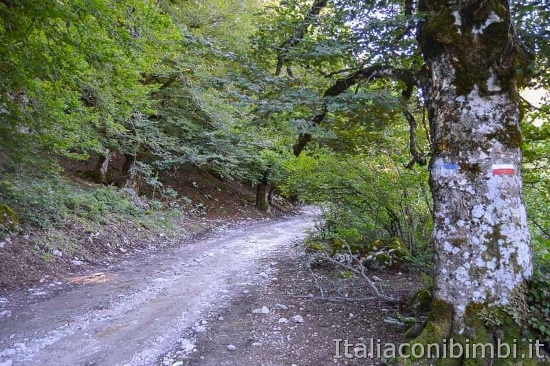 Bosco della difesa - Sentiero C 1 albero