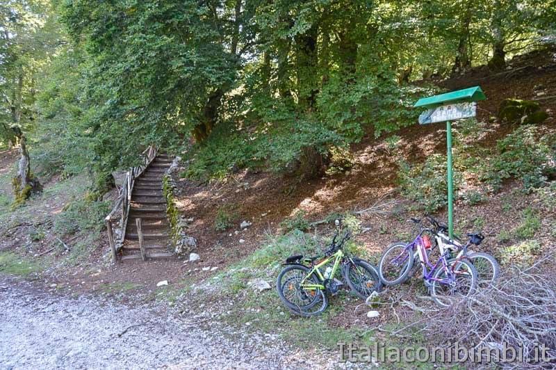 Bosco della difesa - biciclette