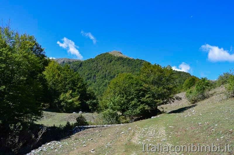Bosco della difesa - monte