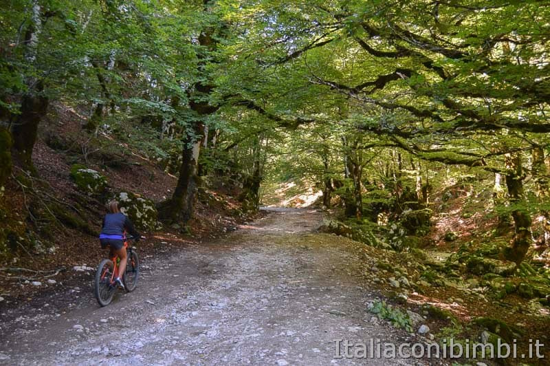 Bosco della difesa - sentiero C 1 bicicletta