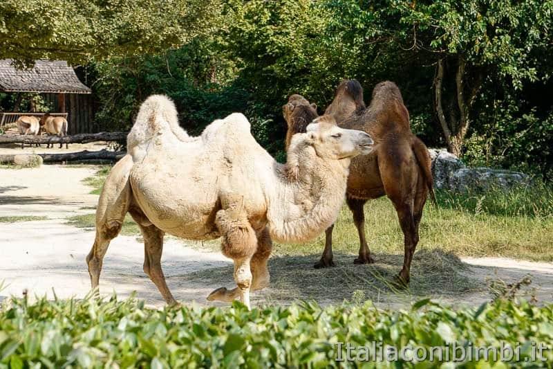 Parco Natura Viva - cammelli