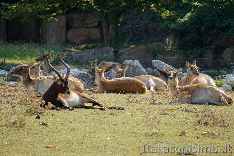 Parco Natura Viva - cerbiatti