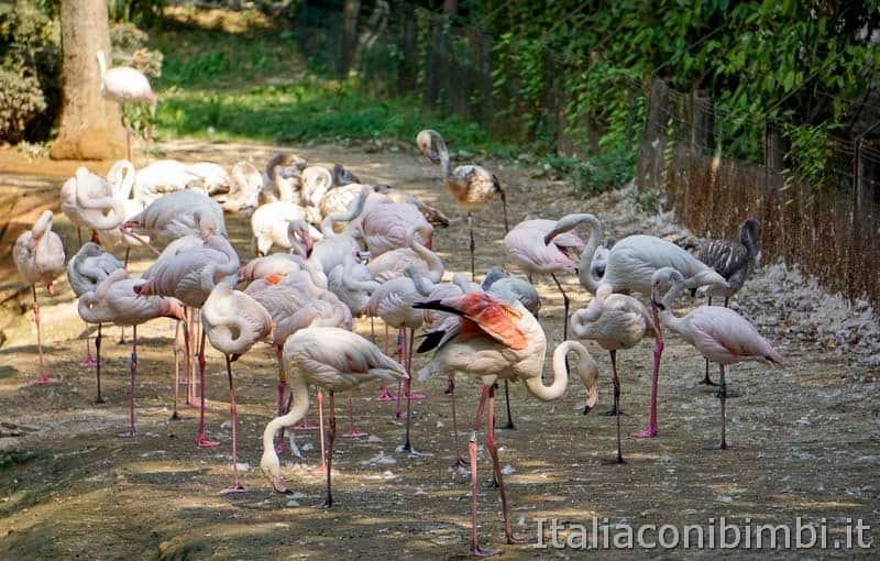 Parco Natura Viva - fenicotteri